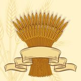 Background with ripe yellow wheat ears Royalty Free Stock Photography