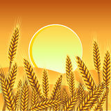 Background with ripe yellow wheat ears.  Stock Image