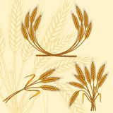 Background with ripe yellow wheat ears.  Royalty Free Stock Image