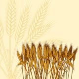 Background with ripe yellow wheat ears vector. Illustration Royalty Free Stock Images