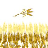 Background with ripe yellow wheat ears, vector. Illustration Stock Image