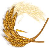 Background with ripe yellow wheat ears, vector. Illustration Stock Photos