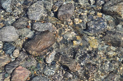 Background of river pebbles under the clear water. Royalty Free Stock Images