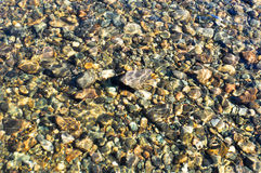Background of river pebbles. Stock Image