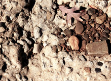Background Of Rock Leaves And Gravel Royalty Free Stock Photography