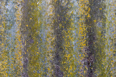 Background rock moss texture Stock Image