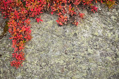 Background from rock with wild plant Stock Images