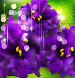 Background with romantic violets Royalty Free Stock Photography