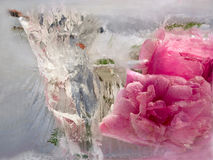 Background of   rosa flower frozen in ice Stock Image