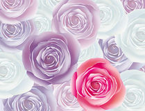 Background from rose Royalty Free Stock Images