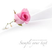 Background with rose Royalty Free Stock Photo