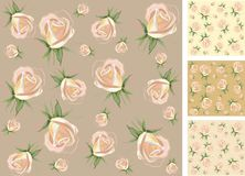 Background.  Rose. Royalty Free Stock Image