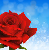 Background with rose Royalty Free Stock Photography