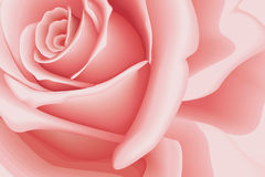 Background Rose Royalty Free Stock Photo