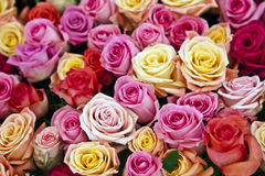 Background from rose flowers Royalty Free Stock Images