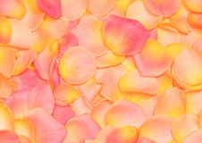 background of rose petals Stock Photography