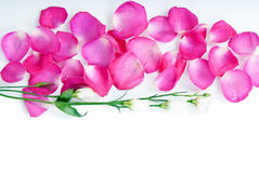 Background with rose petals and flowers Royalty Free Stock Photos