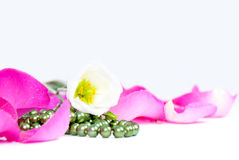 Background rose petals and flowers and beads Royalty Free Stock Photo