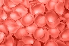 Background of rose petals in Living Coral color. Color of the year 2019. Top view.n royalty free stock images