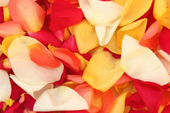 Background of rose petals. Background from multicolored rose petals Stock Photo
