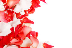 Background of rose petals Royalty Free Stock Photography