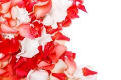 Background of rose petals Stock Photos
