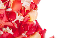 Background of rose petals Royalty Free Stock Images