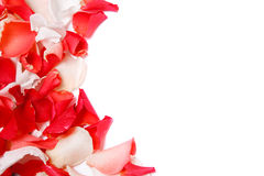 Background of rose petals Stock Images