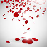 Background of rose petals Royalty Free Stock Photos