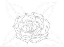 Background from a rose.Vector illustration Royalty Free Stock Photography