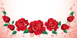 Background with roses. Royalty Free Stock Photo