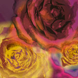 Background roses Stock Photos