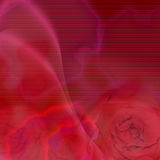 Background roses Royalty Free Stock Photography
