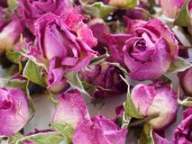 Background of the Roses stock image