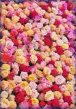 Background from roses flower Royalty Free Stock Photo