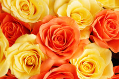 Background of roses Royalty Free Stock Photos