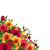Background with roses and freesia flowers. Vector illustration. Vector background with red, orange and yellow roses and freesia flowers and green leaves Royalty Free Stock Image