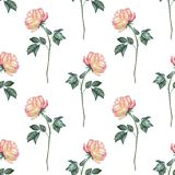 Background with roses 1 Royalty Free Stock Photography