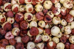 Background of rotten apples. A lot of spoiled moldy apples stock images