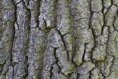 Background rough bark Royalty Free Stock Photos