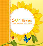 Background with a round card, sunflowers Royalty Free Stock Images