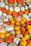 Background of round colorful pumpkins Stock Photos