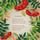 Background with rowan berries and leaves Stock Image