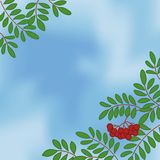 Background with rowanberry on sky Stock Image