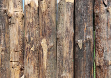 Background of rude logs stockade Stock Photo