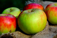 Background  rural farm with apples on coarse cloth sacking close up Royalty Free Stock Photos