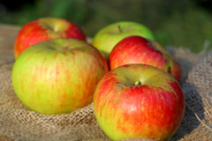 Background  rural farm with apples on coarse cloth sacking close up Royalty Free Stock Images