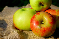 Background  rural farm with apples on coarse cloth sacking close up Stock Photo
