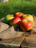 Background  rural farm with apples on coarse cloth sacking Stock Photo