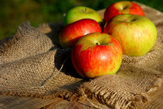 Background  rural farm with apples on coarse cloth sacking Royalty Free Stock Images